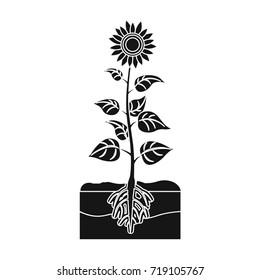 Sunflower, single icon in black style.Sunflower bitmap symbol stock illustration web.