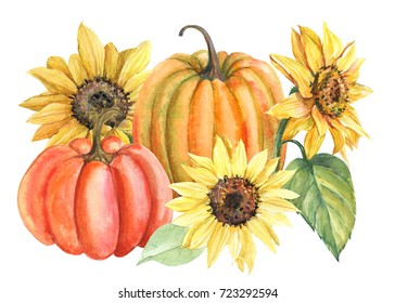 sunflowers and pumpkins watercolor drawing, hand painted on white background