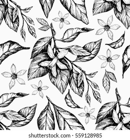 Sunny Mandarin ink seamless pattern. Hand drawing botanical art