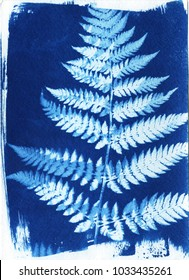 sun-printing or cyanotype process. Some leafs like lavender, petals, flowers, fern, lying on a watercolour paper covered with a special photosensitive liquid. Created by me, Satarova Ekaterina