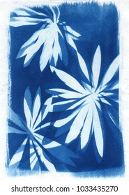 sun-printing or cyanotype process. Some leafs like lavender, petals, flowers, fern, lying on a watercolour paper covered with a special photosensitive liquid. Created by me, Satarova Ekaterina.