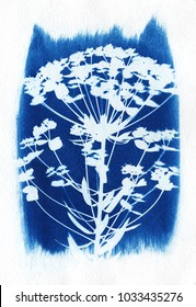 sun-printing or cyanotype process. Some leafs like lavender, petals, flowers, fern, lying on a watercolour paper covered with a special photosensitive liquid.