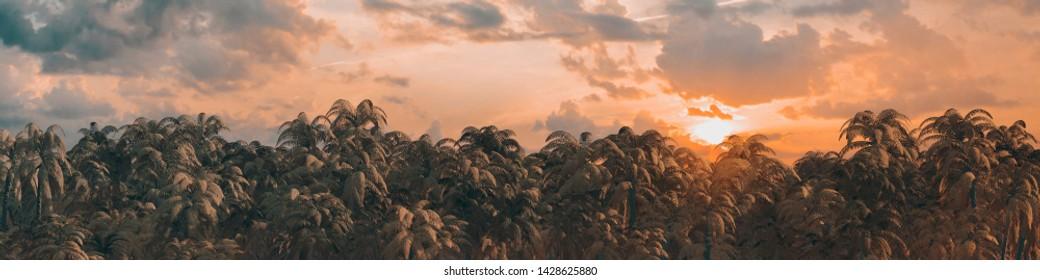 Sunrise sunset jungle panorama / 3D illustration of dense tropical jungle at sunrise or sunset