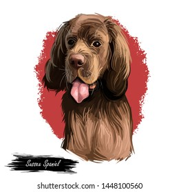 Sussex Spaniel compact spaniel and similar to Clumber-Spaniel. Digital art illustration. Animal watercolor portrait closeup isolated muzzle pet, canine hand drawn clipart, animalistic drawing, doggy