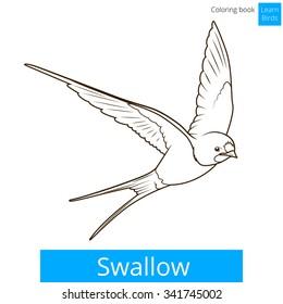 Swallow Learn Birds Educational Game Raster Illustration