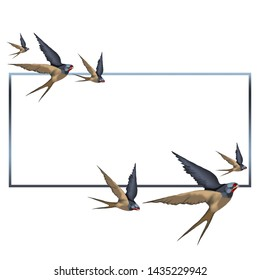 Swallows in flight, isolate. frame.