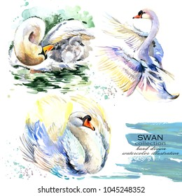 swan hand drawn watercolor illustration set