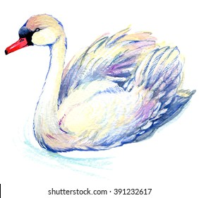 Swan watercolor illustration
