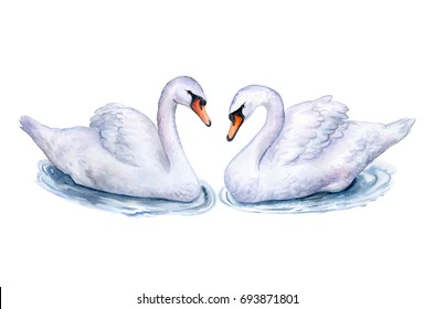 Swans isolated on white background. Watercolor. Illustration. Handmade
