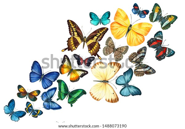 Free Vector | Gradient butterfly swarm silhouette background