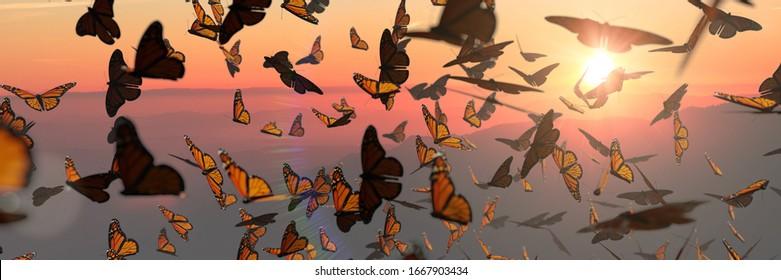 swarm of monarch butterflies, Danaus plexippus group during sunset (3d rendering banner)