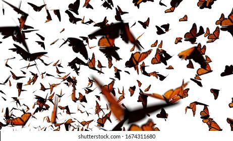 swarm of monarch butterflies, Danaus plexippus group isolated on white background (3d rendering)