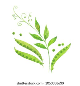 sweet green peas, watercolor illustration  on white background