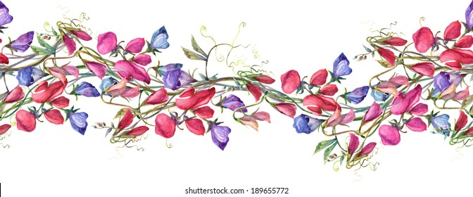 Sweet Pea Flowers  Seamless Pattern.