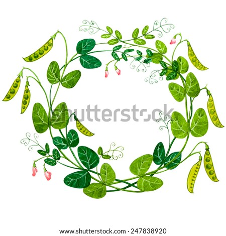 Sweet Pea Watercolor Frame Isolated On Stock Illustration 247838920 ...