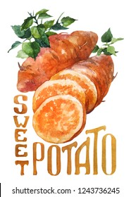 Sweet potato. Hand drawing watercolor on white background with title. Watercolor title, lettering