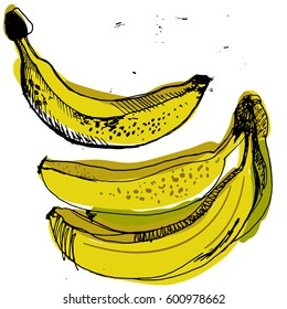 Sweet yellow bananas, sketched banana, hand drawn set of ripe bananas. Black and white graphic with color spots.