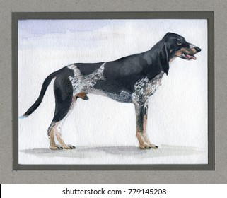Swiss, Lucerne hound painted in watercolor in profile