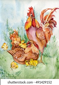 symbol 2017 rooster watercolor, bird breed chicken, family