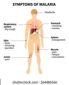 royalty free malaria symptoms stock images, photos & vectors malaria fever malaria symptom diagram #2