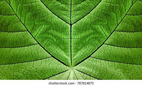 Synthetic Photosyntesis - Biomimicry