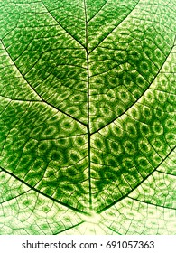 Synthetic Photosynthesis - Biomimicry - Abstract Illustration