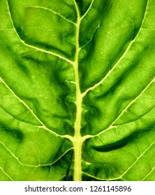 Synthetic Photosynthesis - Biomimicry - Biomaterials