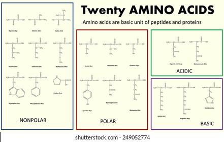 Table of twenty biogenic amino acids