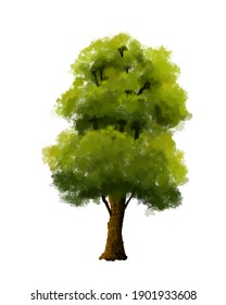 Tall and big tree with thick leaves.Tall and big tree with thick leaves.