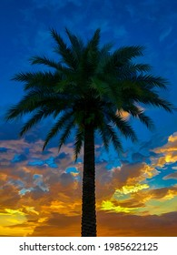 Tall palm tree (unidentified species) in partial silhouette at sunset in Florida, with digital painting effect. 3D rendering.