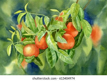 Tangerines with background 2.  Watercolor painting of orange tangerines on a branch with leaves and background hand painted