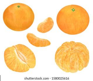 Tangerines Citrus Watercolor illustration Set of summer botanical decorations Christmas Food illustration Tropical fruits