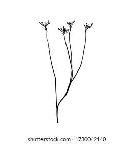 Tansy flower or TaThin curved stems of Tansy ordinary. Graphic print, black and white silhouette. Silhouettes of plants. Ink sketch of a dry weed stalk with flowersnacetum vulgare