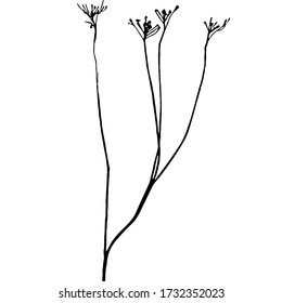Tansy flower or TaThin curved stems of Tansy ordinary. Silhouettes of plants. Ink sketch of a dry weed stalk with flowersnacetum vulgare. Graphic print, black and white silhouette.