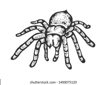 Tarantula Lycosa wolf spider sketch line art engraving raster illustration. Scratch board style imitation. Black and white hand drawn image.