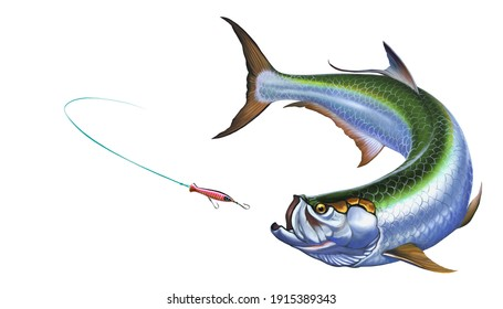 Tarpon fish attacks Popper Lures Topwater Fishing Baits. The Elopiformes fish realistic illustration isolated.