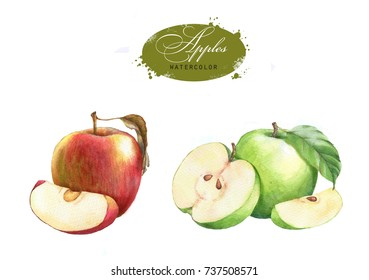 Tasty red and green watercolor apples. Hand drawn illustration of the isolated red and green apples on the white background. Autumn fruits harvest clip art for package design