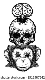 Tattoo art skull brain monkey drawing and sketch black and white isolated on white background.