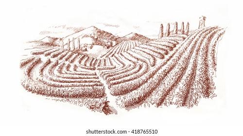 Tea plantation/engraving