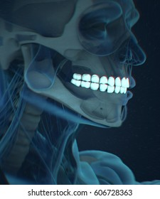 Teeth, xray, human anatomy dental. 3d illustration