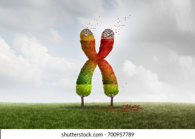 Telomere Aging length loss health concept with DNA and shortening telomeres medical idea as a green tree with falling red leaves on the end caps of a chromosome with 3D illustration elements.