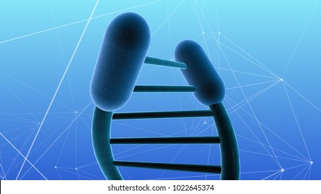 Telomere shortening aging and age related break down of our cells