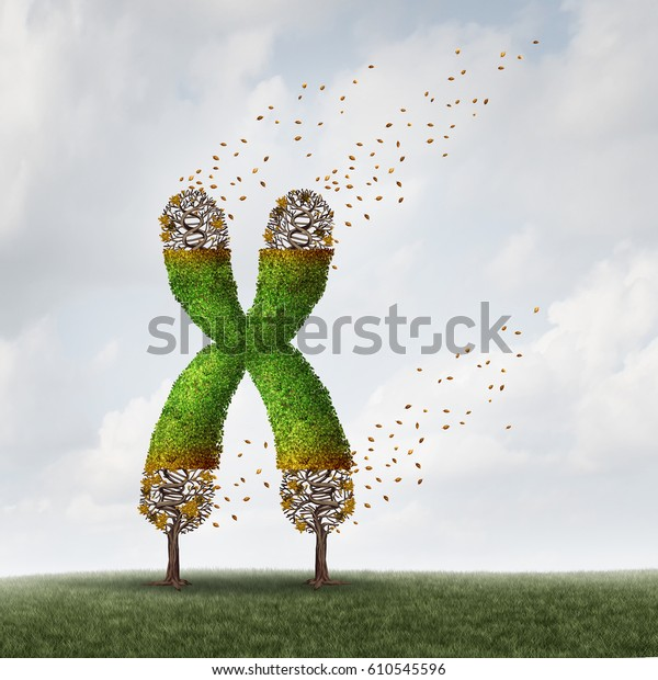 Telomeres length loss with DNA and shortening telomere medical concept as a tree with falling leaves on the end caps of a chromosome for aging and living a shorter life with 3D illustration elements.