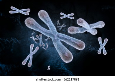 Telomeres - a specialized terminal structure of chromosomes consisting of DNA and proteins. Their function is to protect the ends of the chromosome from degradating.