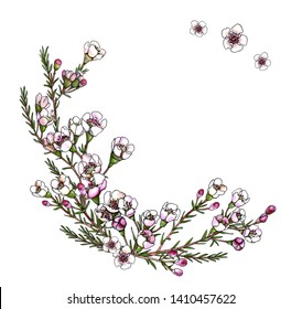 Template for round floral frame. Small white and pink flowers and green leaves of waxflower. Bouquet composition with place for text