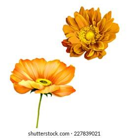 Tender orange poppy flower isolated on white background. Mona Lisa flower, Yellow orange flower, Spring flower.Isolated on white background.