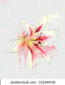 tenderness lilies