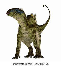 Tenontosaurus Dinosaur on White 3d illustration - Tenontosaurus was an ornithopod herbivorous dinosaur that lived in North America during the Cretaceous Period.