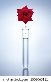 Test tubes with rose flower - medical glassware - 3D illustration