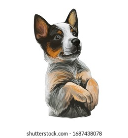 Texas Heeler Puppy crossbred herding dog isolated. Cross Australian Cattle Dog, Border collie and Australian Shepherd. Digital art illustration of hand drawn pet portrait, puppy head, mixed crossbreed